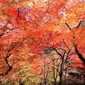 Photos: 大威徳寺