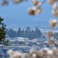 写真: 飯盛山から見た鶴ヶ城3