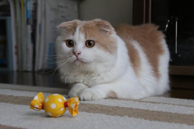 親戚の飼い猫