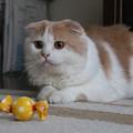 Photos: 親戚の飼い猫