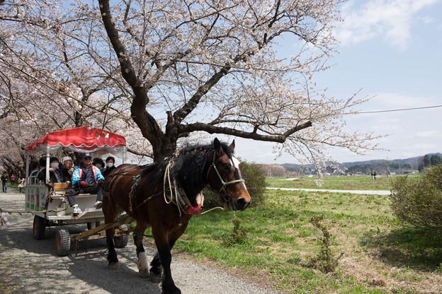 写真: 北上展勝地 馬車2