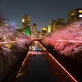 写真: 目黒川夜桜