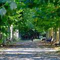写真: 新宿御苑並木道