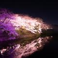 Photos: 福岡城 夜桜