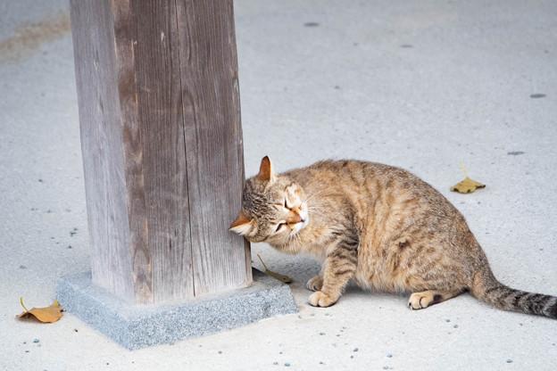 宗像大社 猫