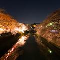 大岡川プロムナード夜桜2