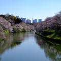 Photos: 千鳥ヶ淵桜
