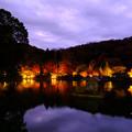 Photos: 薬師池公園紅葉ライトアップ