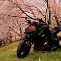 バイクと桜