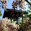 藤と寺院・2