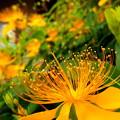 写真: 輝き放つ美容柳。
