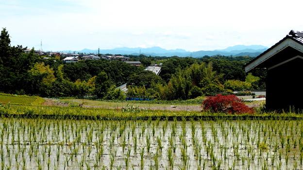田園風景・1