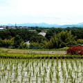 写真: 田園風景・1
