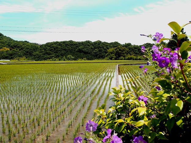 田園風景・2