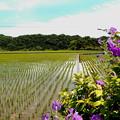 写真: 田園風景・2