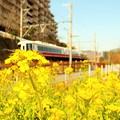 写真: 菜の花電車1