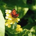 Photos: 白菜の花と紅