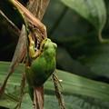 Photos: 雨蛙