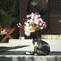 Photos: 見張り猫ちゃん