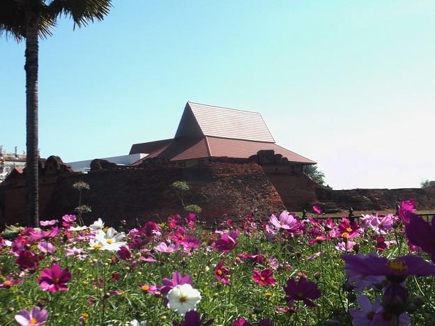 チェンマイ城壁の花