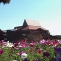 Photos: チェンマイ城壁の花