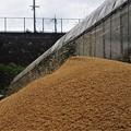籾殻が舞う脱穀