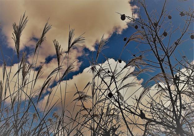 ススキと柿と秋の空