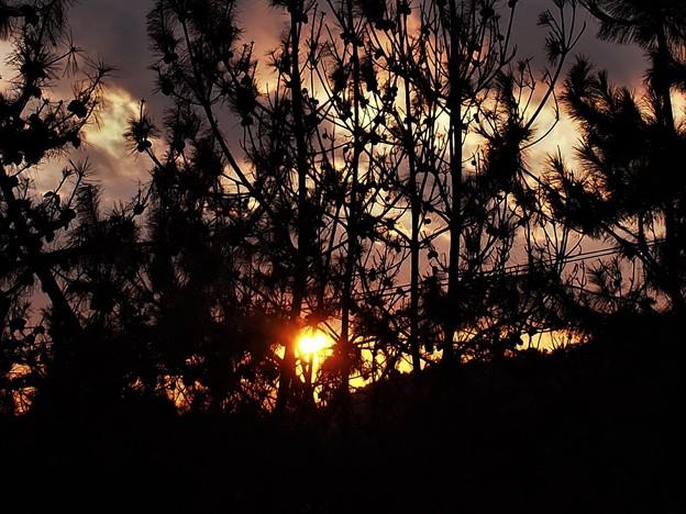 松林に陽が沈む