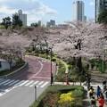 東京ミッドタウン「ミッドタウン・ガーデン」(2018.3.23)