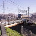 写真: 桜と電車