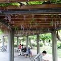 Photos: 清澄公園DSC06063