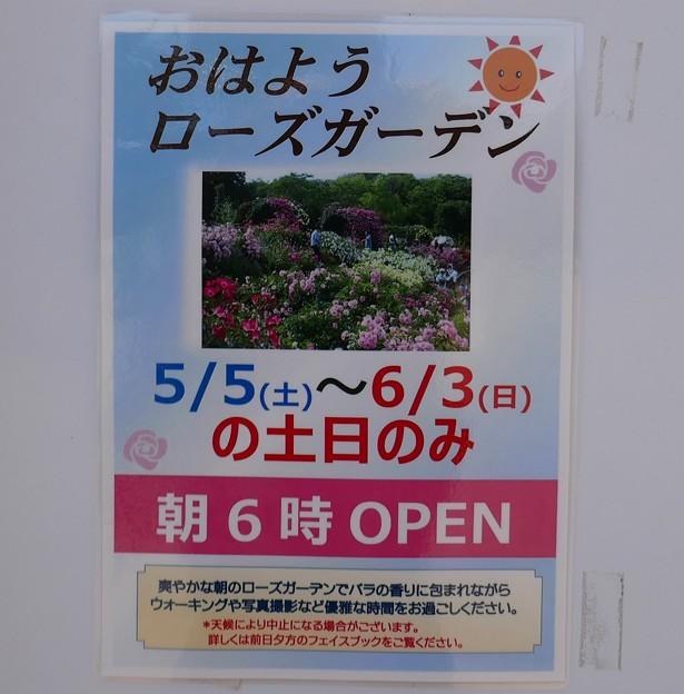 2018京成バラ園P1060486