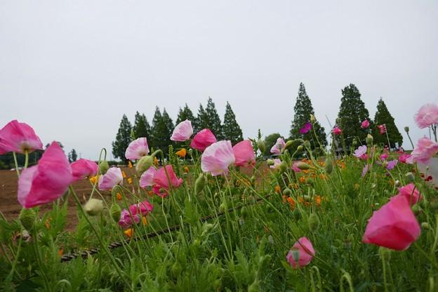 あけぼの山農業公園P1060977