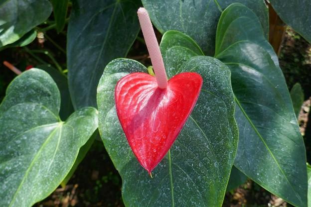 熱川バナナワニ園P1070692