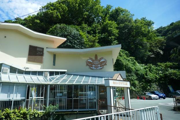 熱川バナナワニ園P1070691
