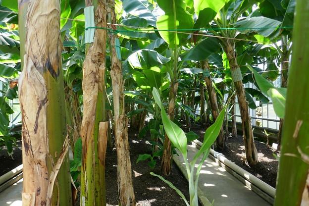 熱川バナナワニ園P1070694