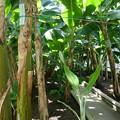 写真: 熱川バナナワニ園P1070694