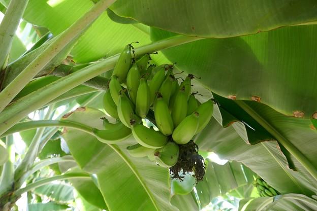熱川バナナワニ園P1070696