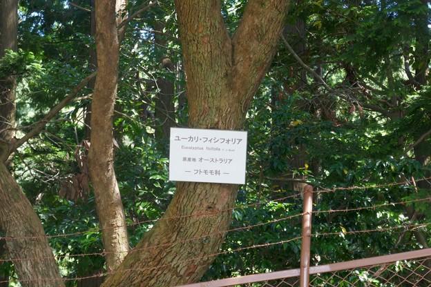 熱川バナナワニ園P1070700
