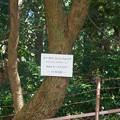 写真: 熱川バナナワニ園P1070700