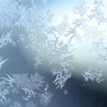 写真: 霜消えゆく C