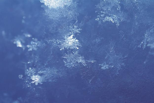 写真: 早春の雪結晶