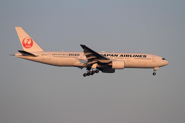 B777 JAL 夕陽に赤く
