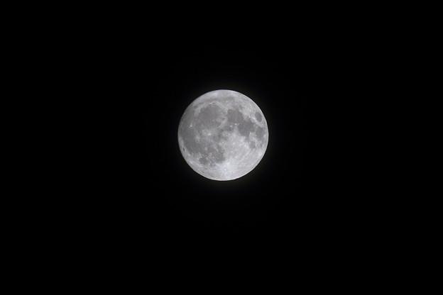 中秋の名月 月齢は14.4 (3)