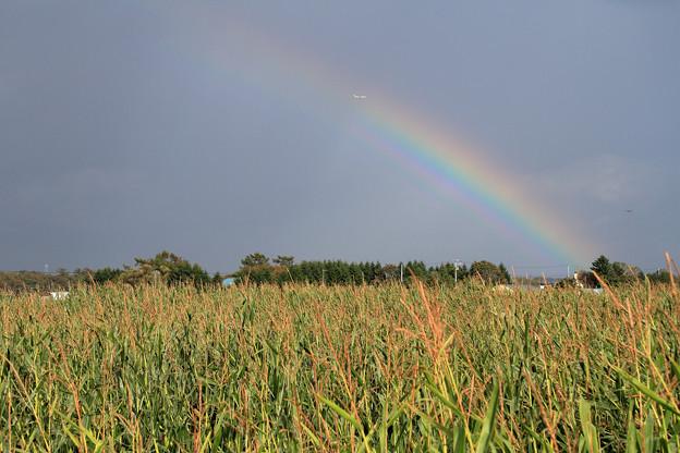 Photos: とうきび畑に虹