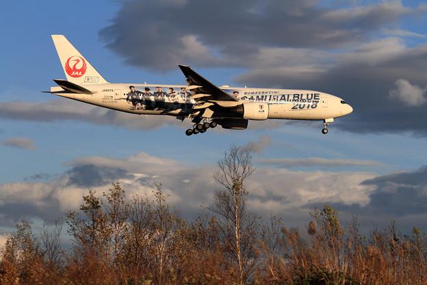 B777 JAL SAMURAI BLUE 夕陽に照らされ