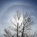 写真: 晩秋の空に幻日環 (2)