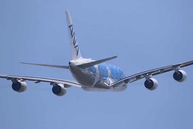 A380 ANA JA381Aがtakeoff (3)