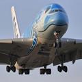 Photos: A380 ANA JA381Aが夕刻2度目の飛来