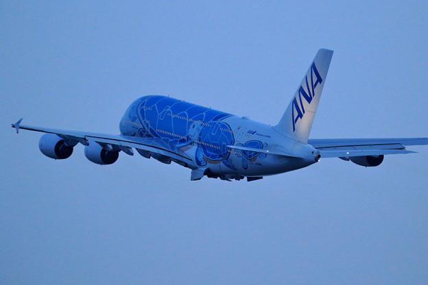 Photos: A380 ANA JA381A takeoff (3)